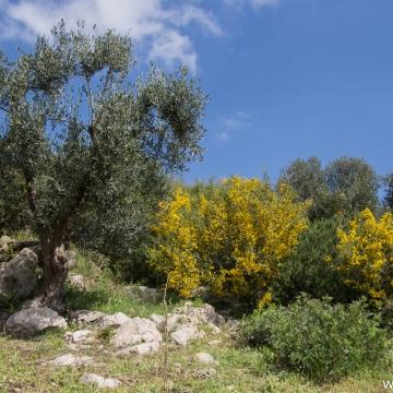 Masseria Bufolaria - Ugento